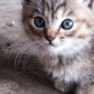 職場の野良猫ちゃん子猫一ヶ月の兄弟子猫4匹です。