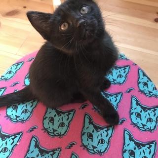 生後一ヶ月の仔猫