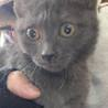 糸島市より多頭飼育飼育の子猫4匹 サムネイル3