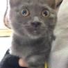 糸島市より多頭飼育飼育の子猫4匹 サムネイル4