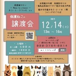 藤井寺市 保護猫譲渡会