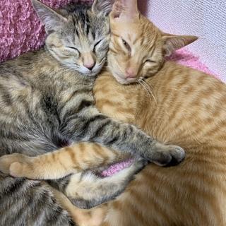 子猫2匹を保護しました。