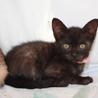 可愛い小柄な黒猫なたーしゃちゃん