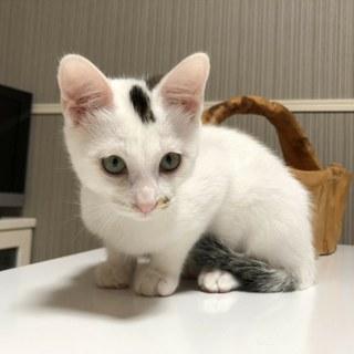 可愛い子猫の兄妹①