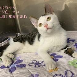 こねこ・成猫の里親会 in 戸越銀座商店街 サムネイル3