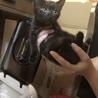 キジトラと黒猫の推定4ヶ月のツンデレ姉妹