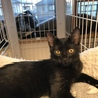黒猫ガイくん、里親さん決定