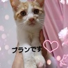 【12/22⭐️堺東にて里親会】参加猫ブランくん