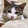 美男!甘えん坊の子猫です