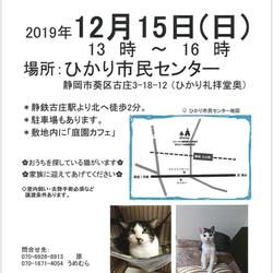 子猫成猫譲渡会