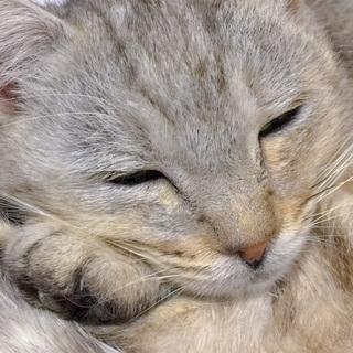 大人しくて甘えん坊な美猫
