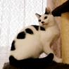 【12/15銀座】気品高く美しい!マリメッコちゃん