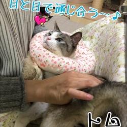 保護猫の譲渡会❤️久米川みどり動物病院 サムネイル1