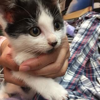 10月7日生まれ抱っこ大好きオス猫