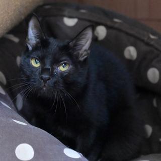 ハンディがある黒猫