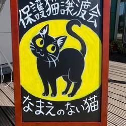 猫の譲渡会  アシストファーム南国inなまえのない猫