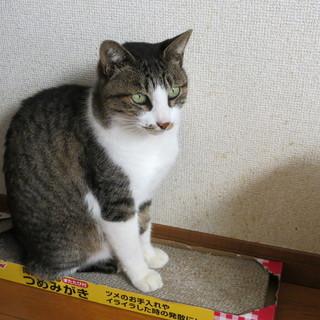 成猫ですが、人なつこいです。^-^