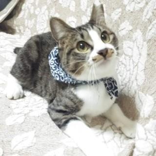 スエーデンの環境活動家のグレタちゃんみたいな猫
