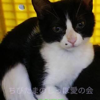 5匹の持ち込み子猫達④最終期限27日!