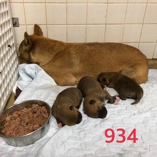 乳飲み子3匹抱えています。助けて下さい。