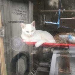 窓ぎわ猫。