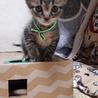 甘えん坊なゴロゴロ子猫キーン