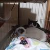 預かり猫さんが4匹来ました!