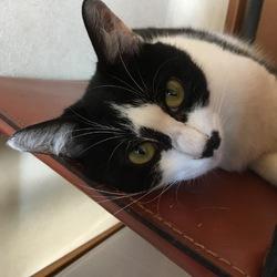 若猫の誤嚥性肺炎