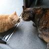 猫ちゃん2匹の里親募集です
