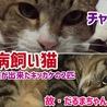 実家の白血病飼い猫への想い