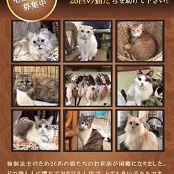 緊急 猫カフェ譲渡会