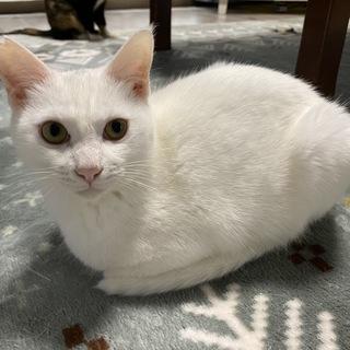 猫が好きでストーカーしちゃう猫いぶき