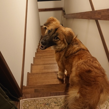 階段登って私の部屋の前にまで来て 散歩のお誘いにやってきたゆずちゃん(*^_^*)