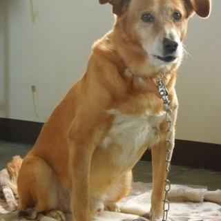 【最終期限】12/25日・根室保健所の大型犬