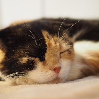 とっても小柄な三毛猫さん。