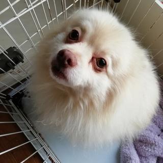 飼育拒否からの保護犬