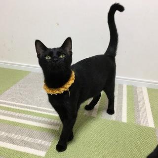 黒猫あんずちゃん