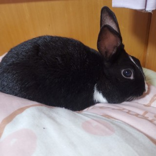 ミニウサギの里親になって下さい。