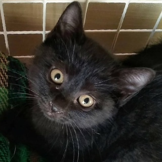 犬猫同居中 おしゃべり好きな黒猫さん
