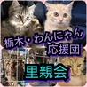 栃木・わんにゃん応援団   譲渡会
