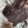 人懐っこいウサギです