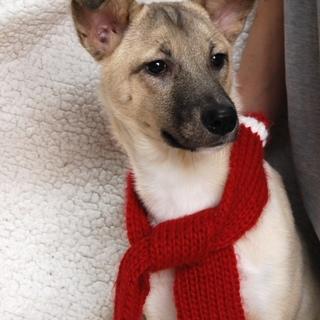 中型犬の男の子 シェリ 1才
