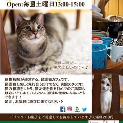 土曜日の保護猫カフェ:Happy Tabby Cafe