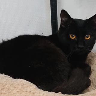 真っ黒な猫の ぐり