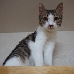 猫のはこぶね里親会 サムネイル1