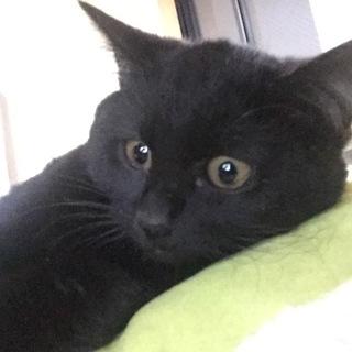 黒猫ピゴくん