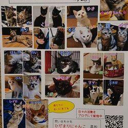 保護猫の譲渡会&映画試写会のお知らせ 三重県名張市