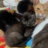 人懐こい小柄な黒猫なたーしゃちゃん
