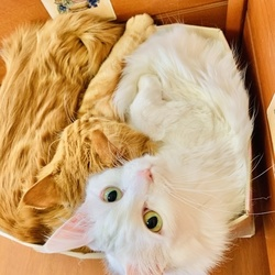 わが家の猫〜お正月の過ごし方〜