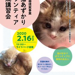 子猫あずかりボランティア育成講習会